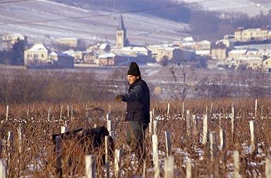 Beaujolais neige guilaine de seze