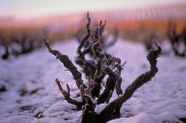 Beaujolais neige guilaine de seze 2
